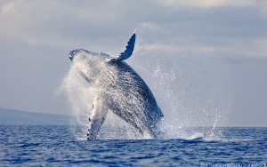 WhaleWatch Jim-Tierney iStock Thinkstock